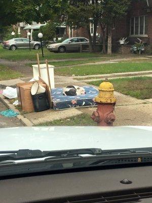 Boo, un perro abandonado en Detroit