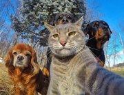Este gato saca la que probablemente sea la mejor selfie del 2017 (INSTAGRAM)
