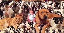 Cuatro perros y un gato reciben a un nuevo integrante humano en la familia como se merece (INSTAGRAM)