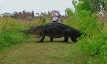 Caimán de casi 4 metros de largo se cruza en el camino de estas personas (YOUTUBE)