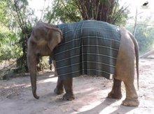 La gente está tejiendo jerséis gigantes para mantener a los elefantes calentitos (SOS WILDLIFE)