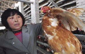 China detecta una forma más severa de gripe aviar pero la OMS aclara que sólo es una amenaza para las aves de corral (STRINGER CHINA / REUTERS)
