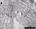 Un cráter de impacto en Marte se relaciona con un tsunami gigante