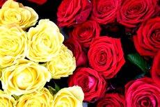 Els floristes preveuen vendre sis milions de roses (Europa Press)