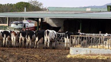 El II Livestock Forum Networking Day se centrarà en la ramaderia de precisió (EUROPA PRESS)